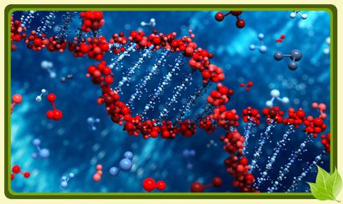 Молекулярные генетики